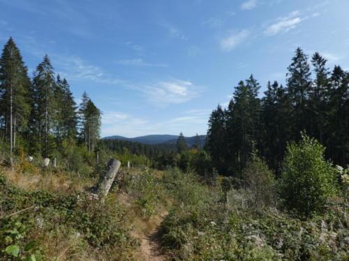 Ausblick vom Ilberg