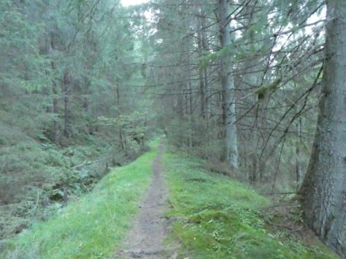 Wanderweg auf altem Bahndamm
