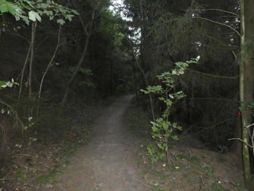 Abstieg nach Wildemann